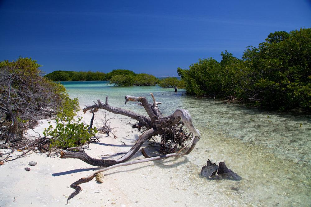 Shoreline on Boca Chita key