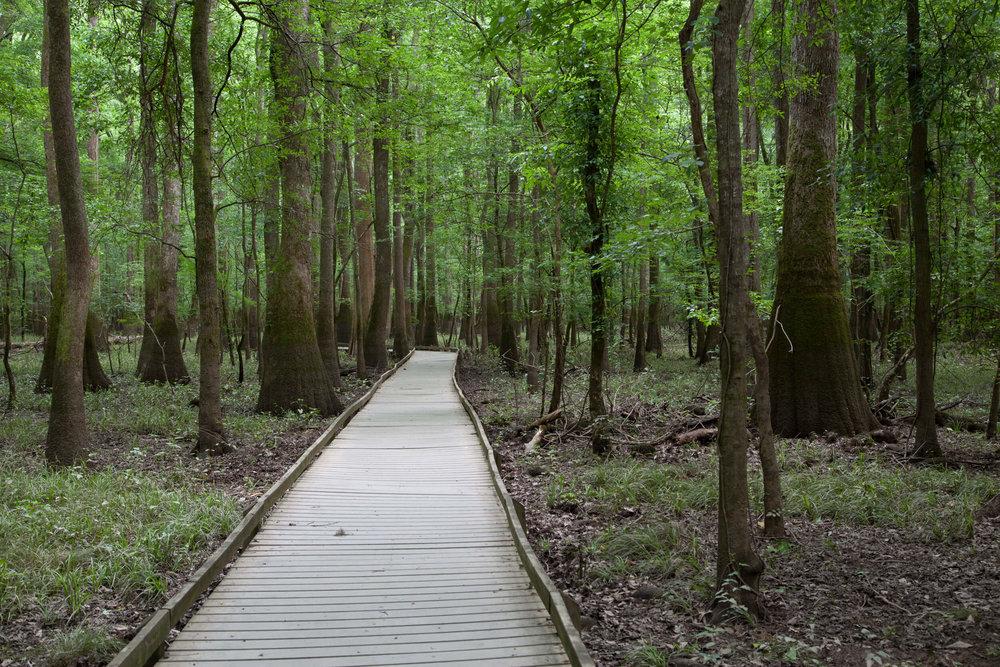Sims Trail Boardwalk