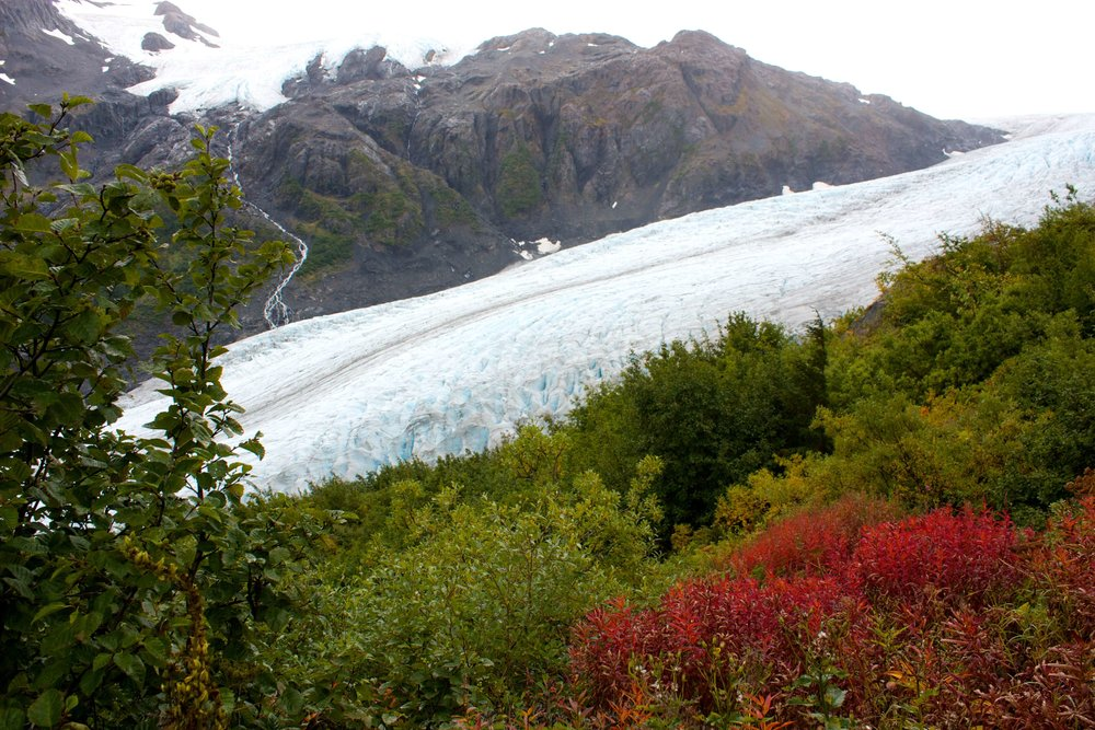 Exit Glacier at Kenai Fjords
