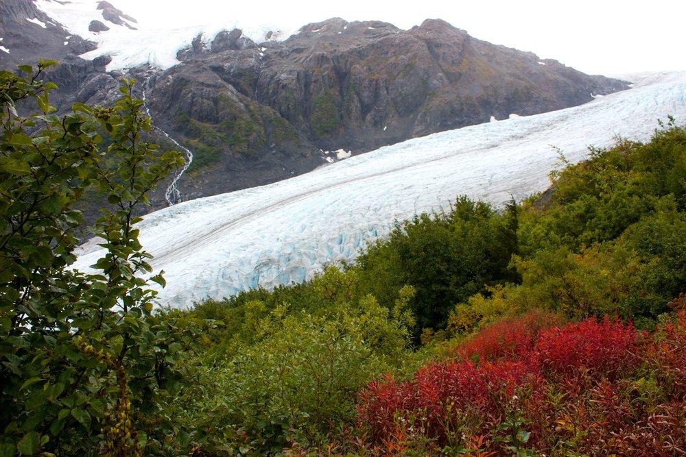 Exit Glacier at Kenai Fjords