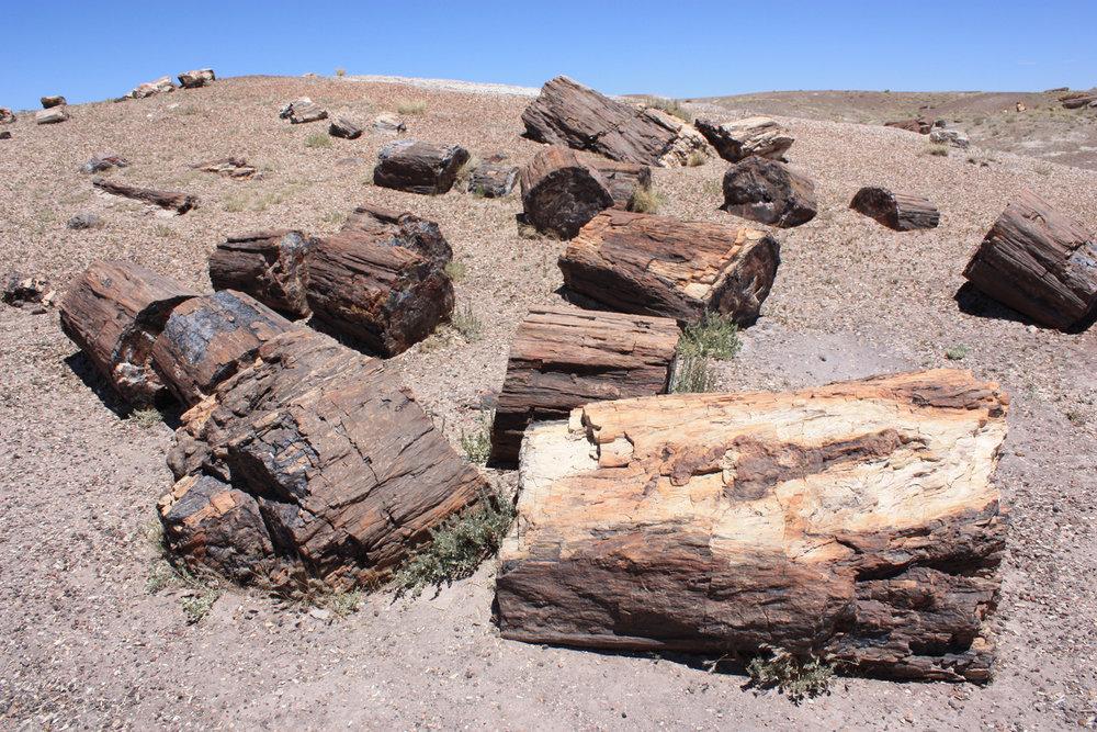 Random logs