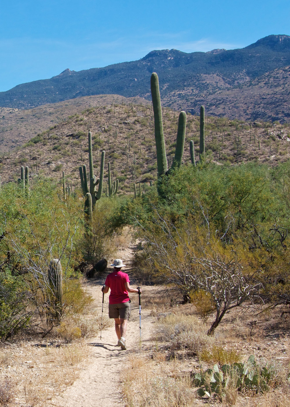 Terry trekking the trails of the Rincon Mountain District's Cactus Forest during park visit  #21 .