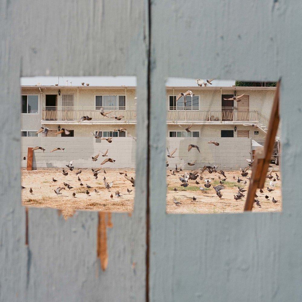 Pigeon_Vision.jpg
