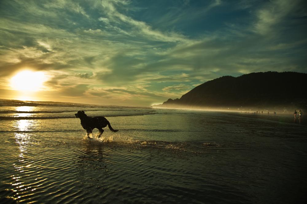 dog-1112.jpg