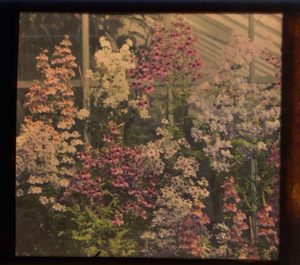 Vintage floral autochrome photo