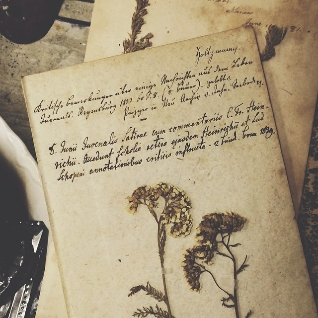 Antique botany print