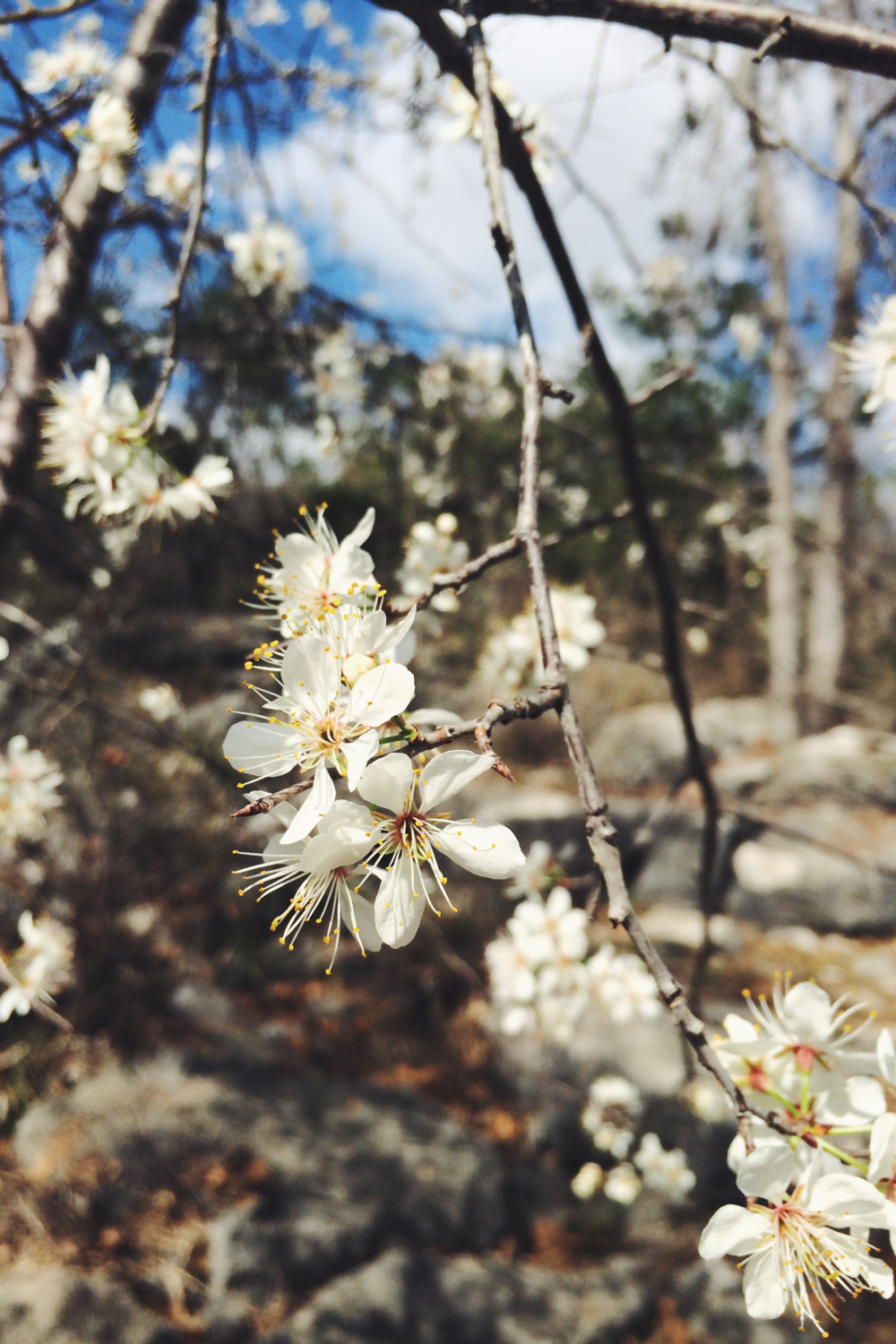 Blossoms. Photo via Dalena Vintage.