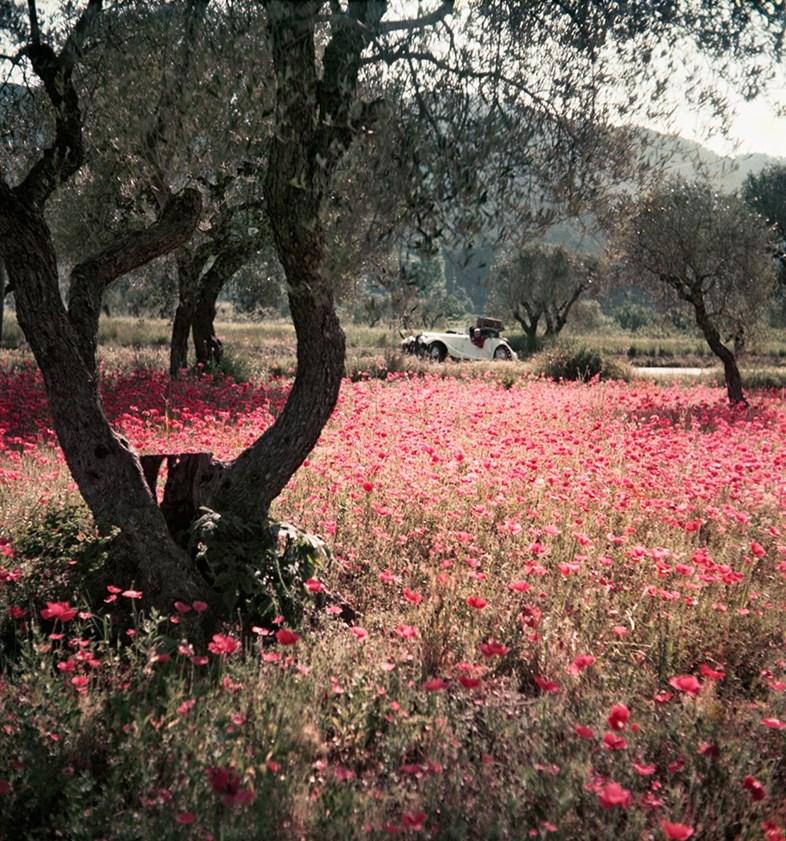 Florette dans le Morgan, Provence, May 1954
