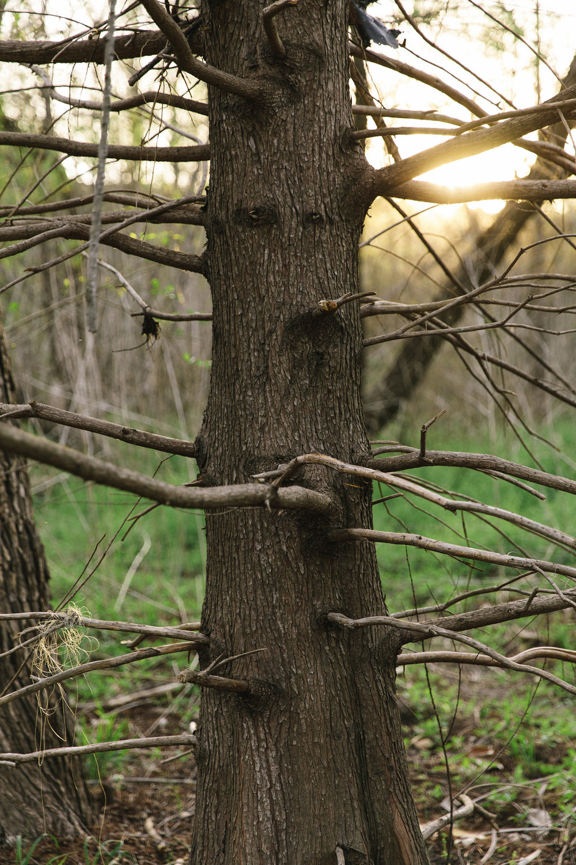 A walk in the woods. Photo by Nicole Mlakar.