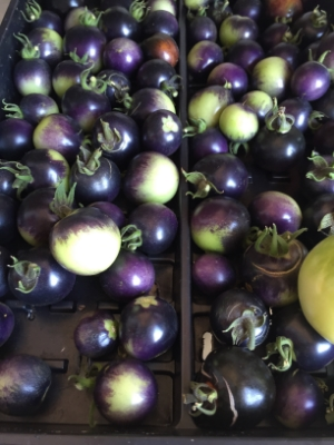 Indigo Rose Tomatoes - what about these beauties?  Something, huh?