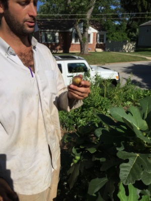 Matt inspecting a freshly harvested fig from 7th Generation Garden at EarthDance.