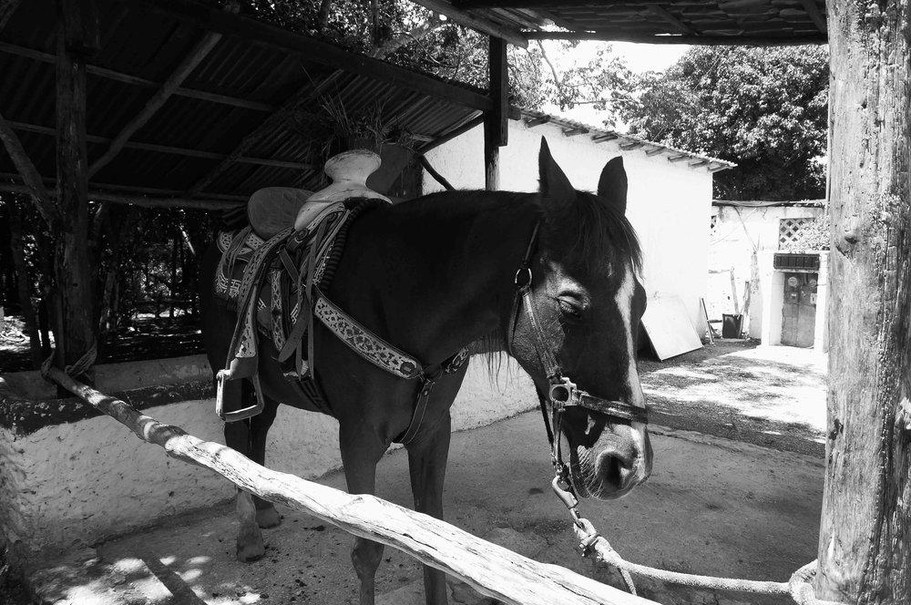 yucatan-029.jpg