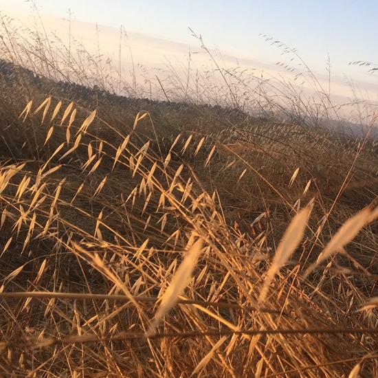 ridge-crop-nico-jikoji-2.png
