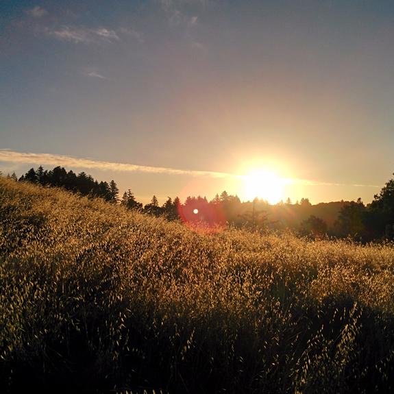 sunrise-zazen-photo-575x575-1.jpg