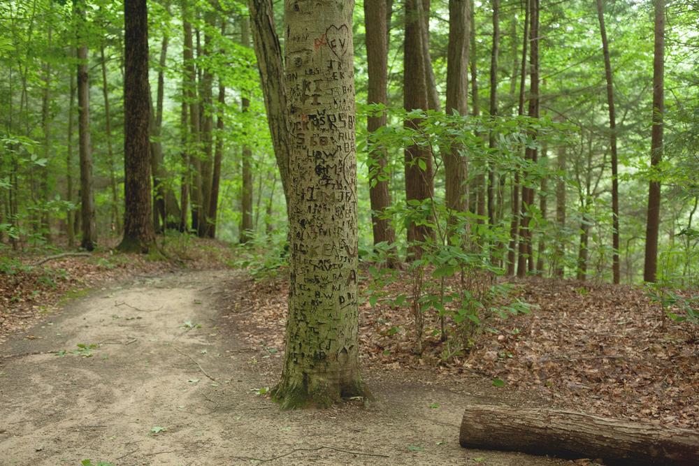 Rim Trail, Lucifer Falls; Ithaca, NY