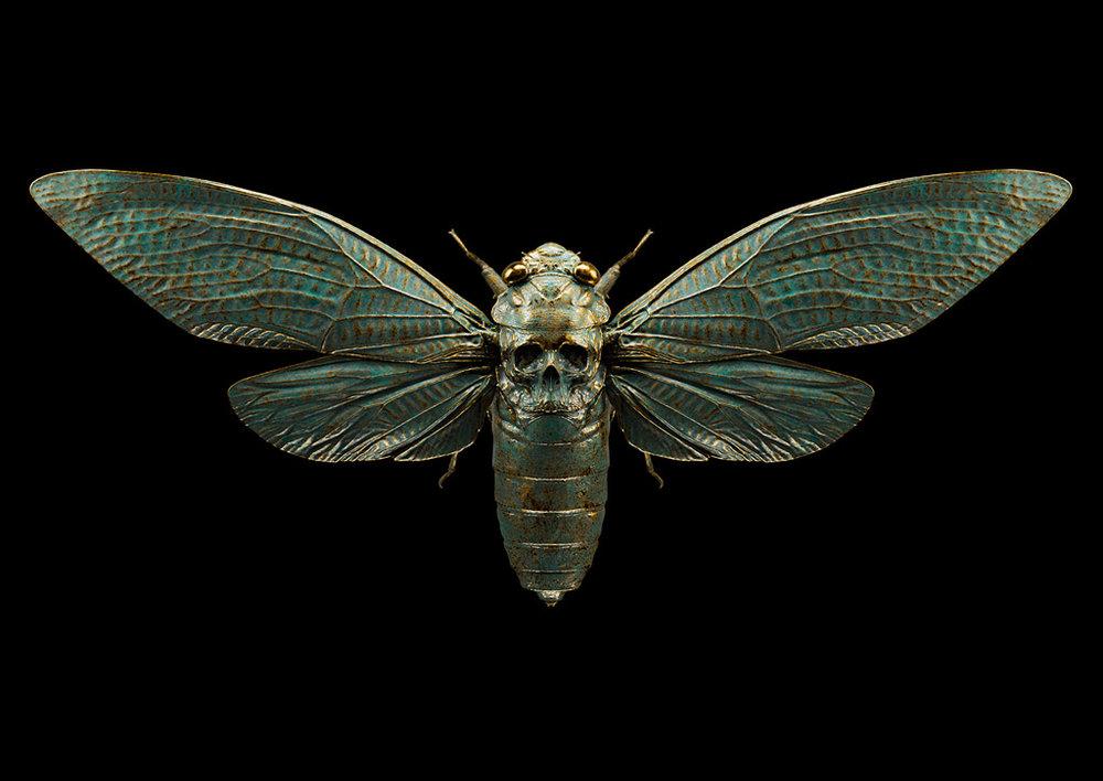 Skull Cicada Bronze -