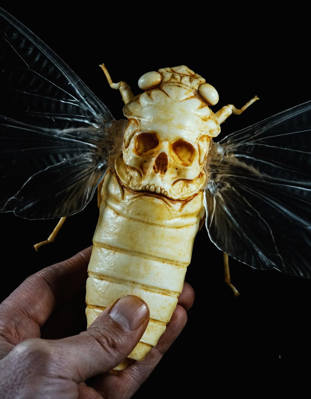 cicada_002.jpg