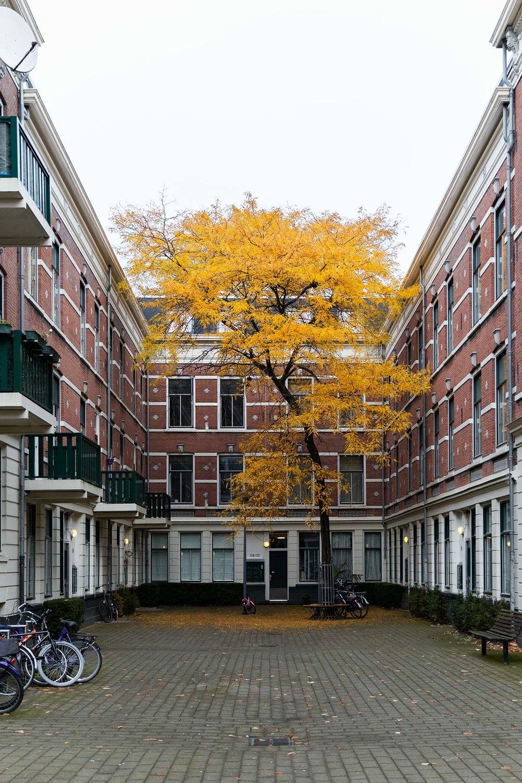 Tim_Allen_Rotterdam_8.jpg