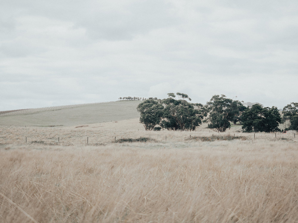 TAKING A BREATHER IN THE YARRA VALLEY -