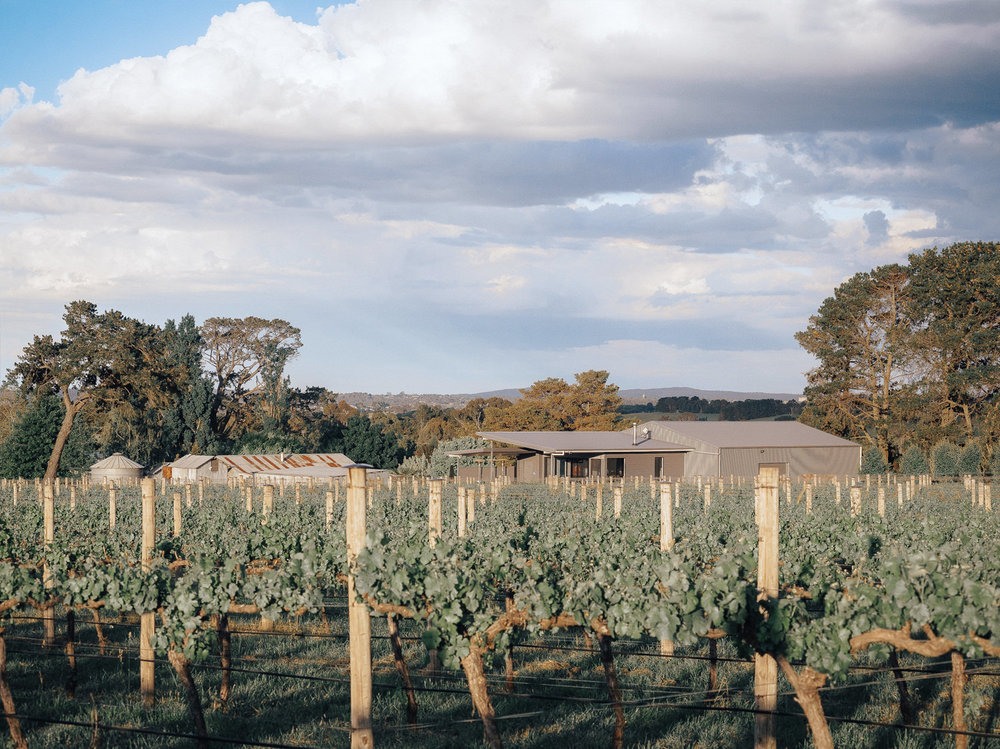 Travel_Australia_Guide_Weekend_Destination_Hotel_Airbnb_Things To Do_Pauline Morrissey_NSW_Orange_Winery_Rowlee Wines Vineyard.jpg
