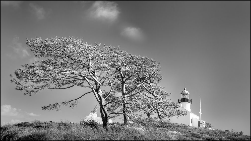 """Bent Trees and Lighthouse"""