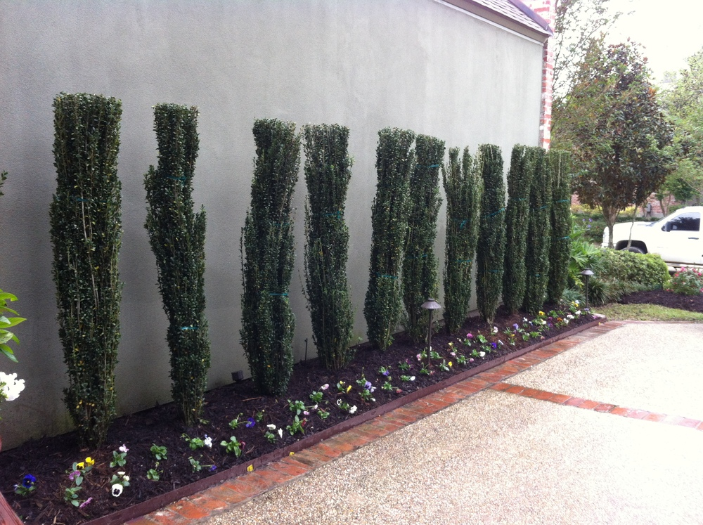 Landscaping with Bushes, Greenscape Design - Baton Rouge, LA