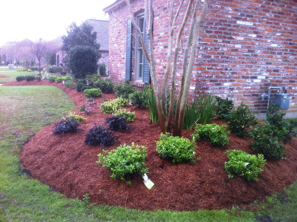Front Yard with Bushes, Greenscape Design - Baton Rouge, LA
