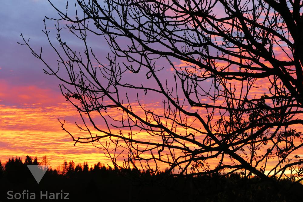 Sunset, Vestby 2015