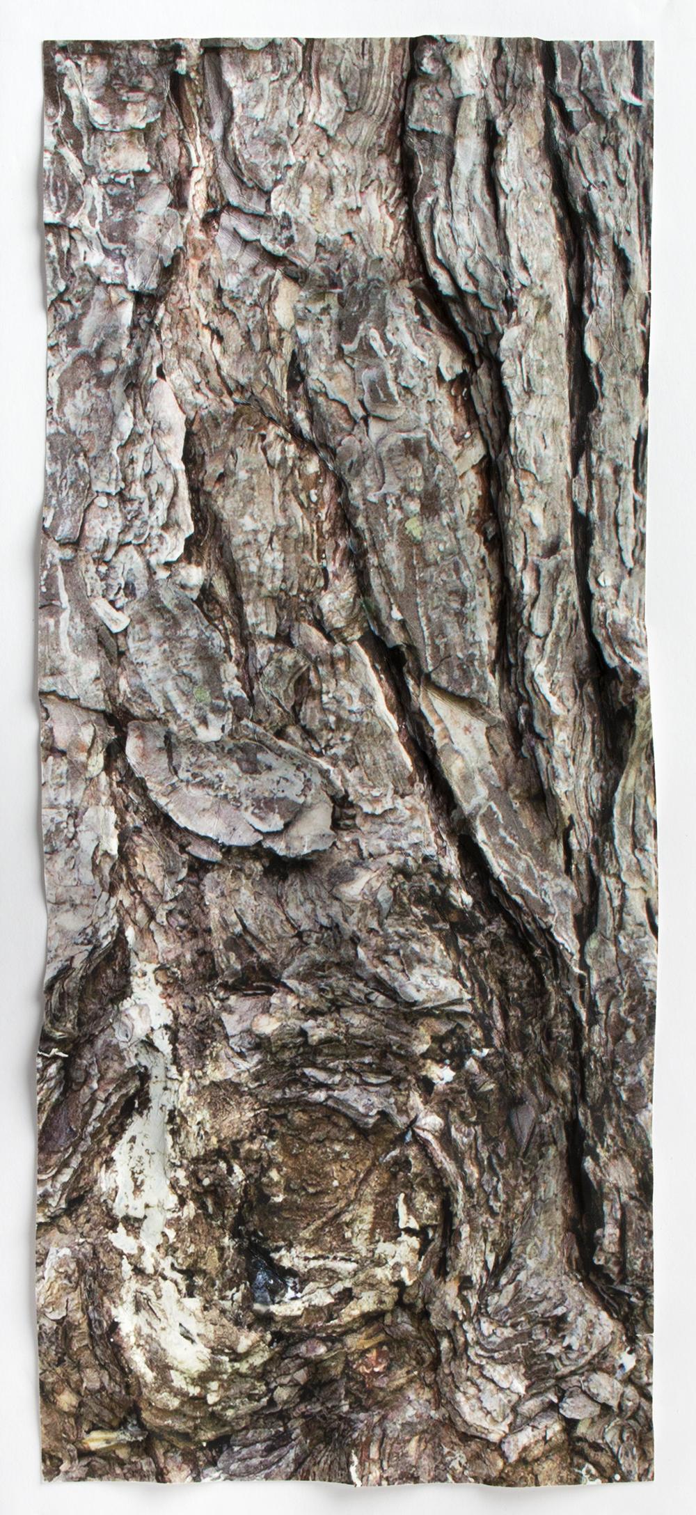 Frankie Macaulay_Paper Bark Iweb.jpg