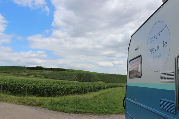 Bus-in-vines.jpg