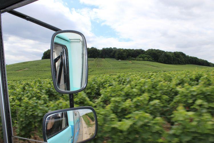 Vines-window.jpg