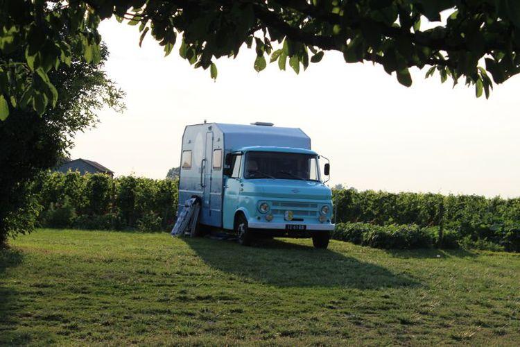 bus-vineyards.jpg