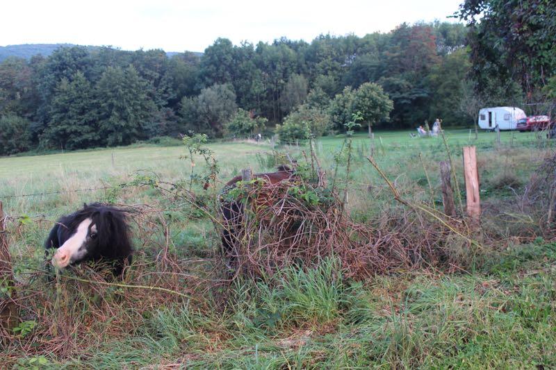 Pony-campsite.jpg