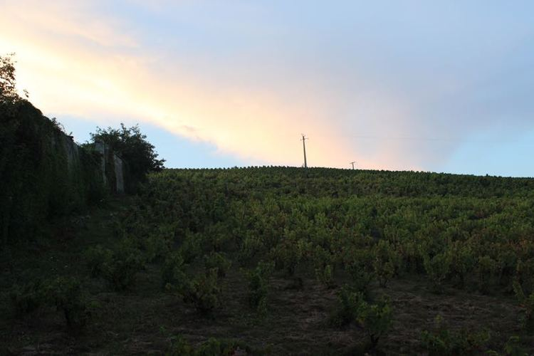 Sunset-vineyard.jpg