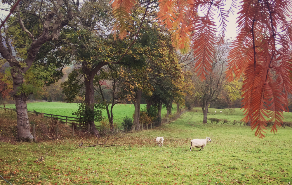 AutumnBlog6.jpg