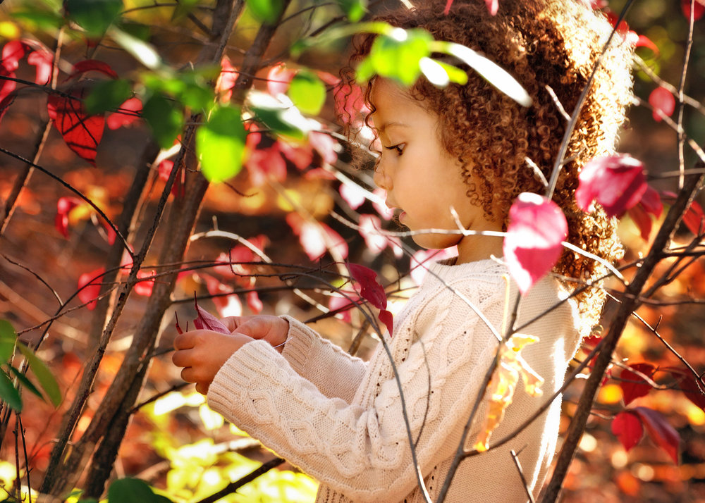 fall-photos-free-lense-photo-04.jpg