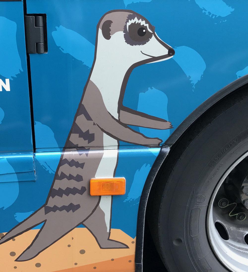 Meerkat bus design