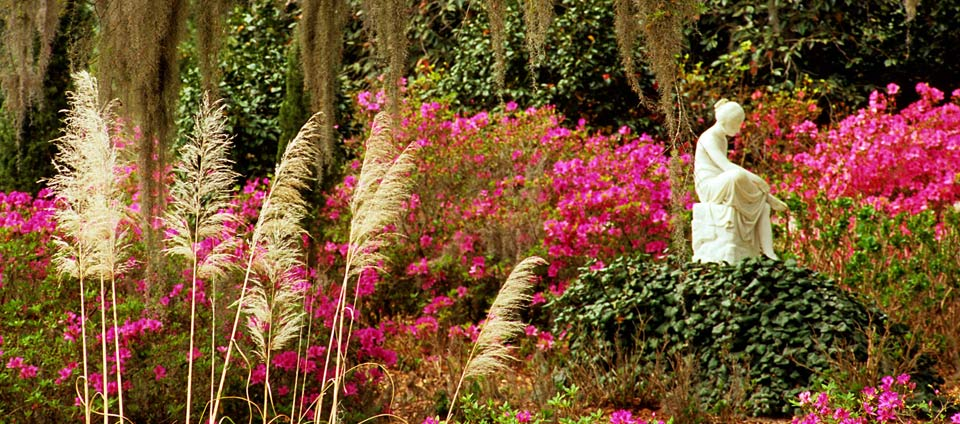Flower gardens at middleton place.jpg