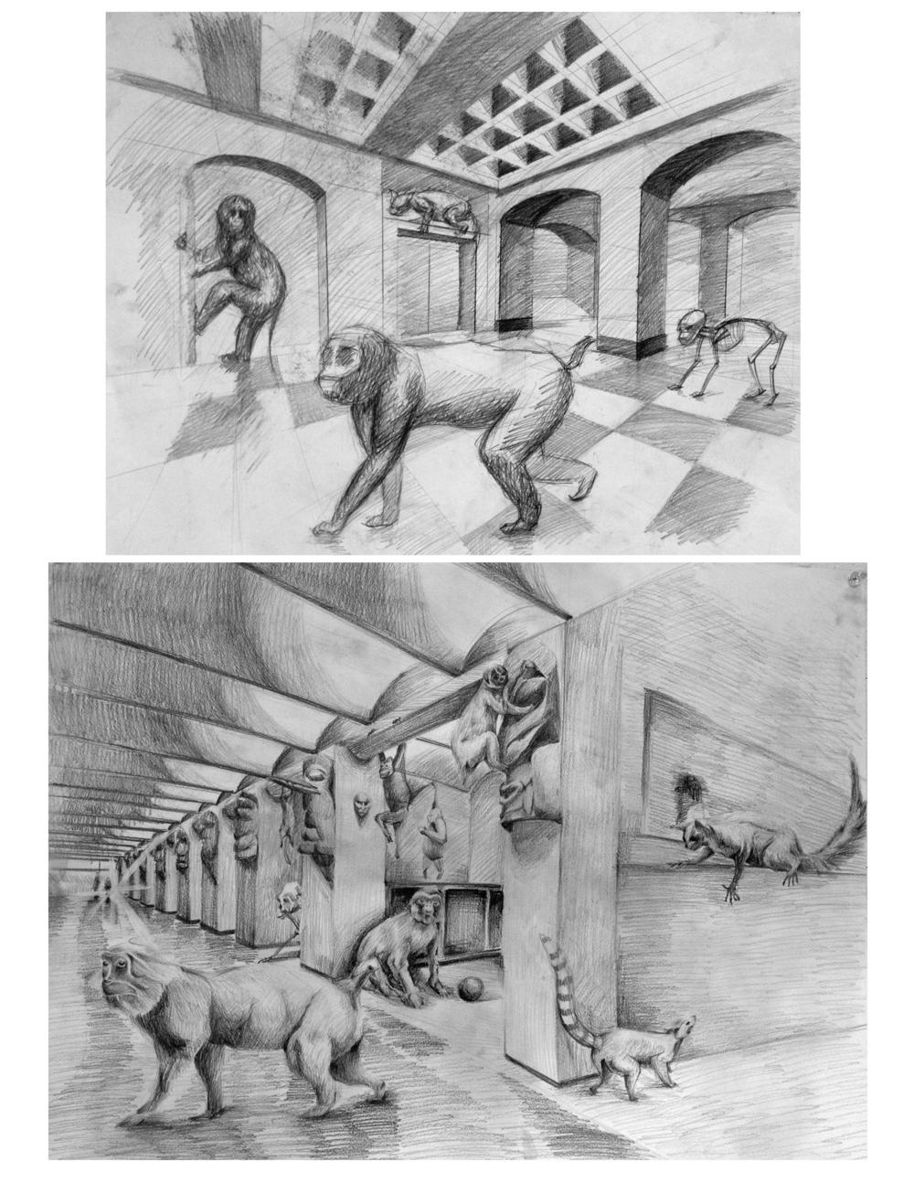 71-primates.jpg