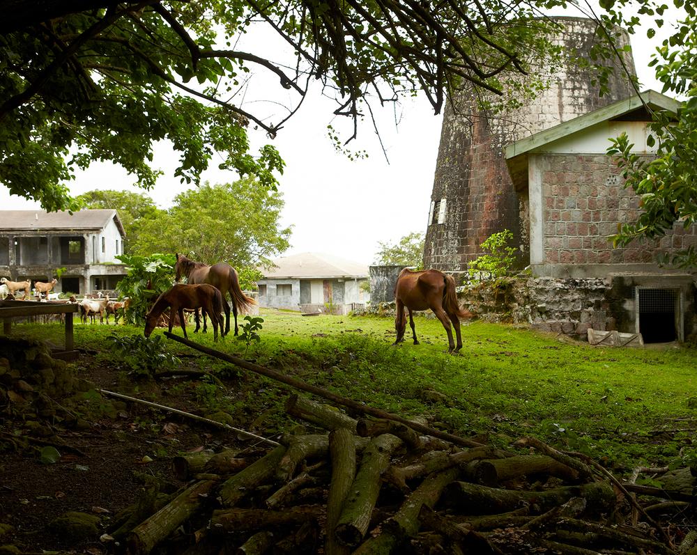 tyrell-chattel-nevis-horses.jpg