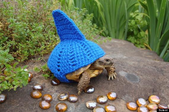 If we're tortoises, I want to be *this* tortoise! SHARK TORTOISE!