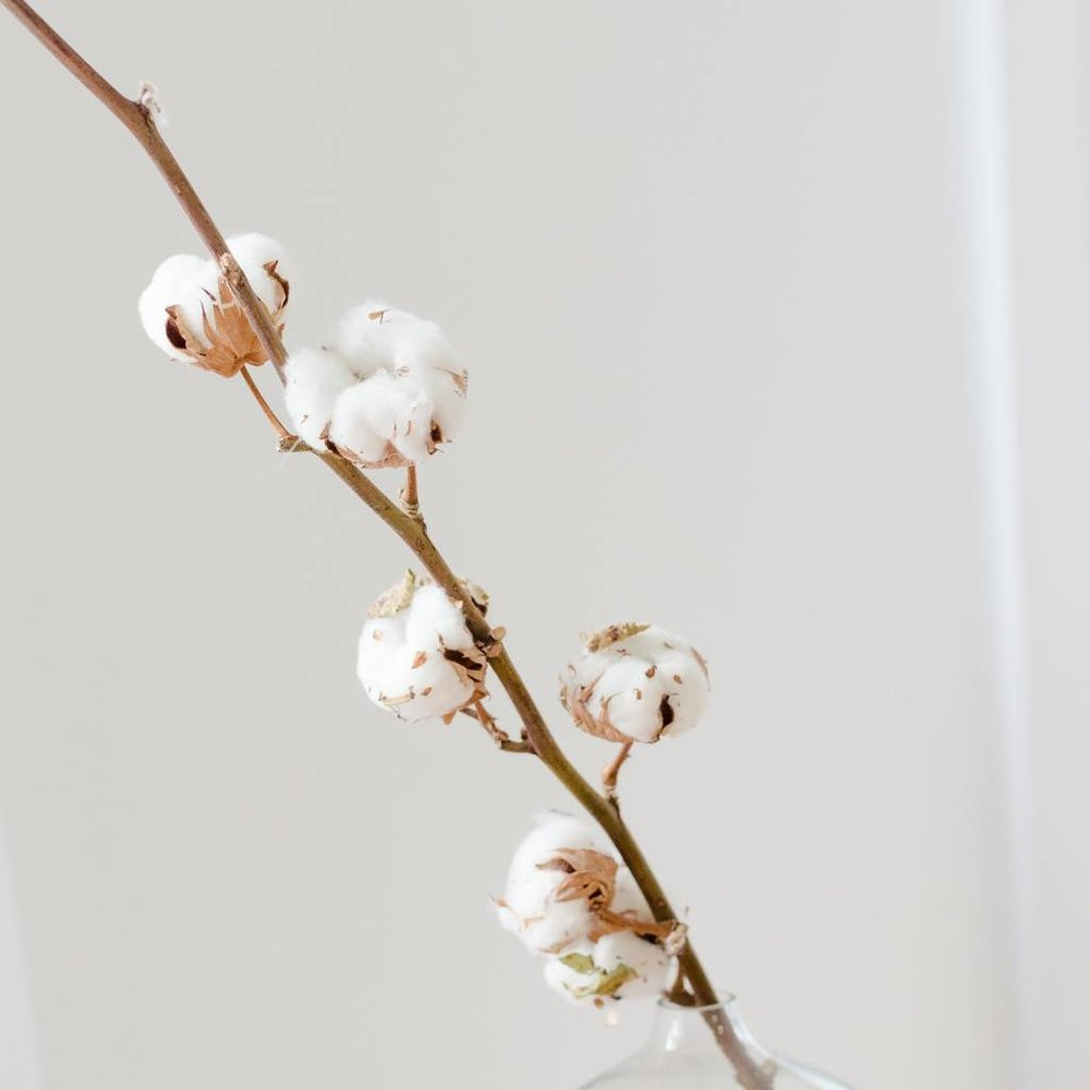 cotton-flower-rod.jpg