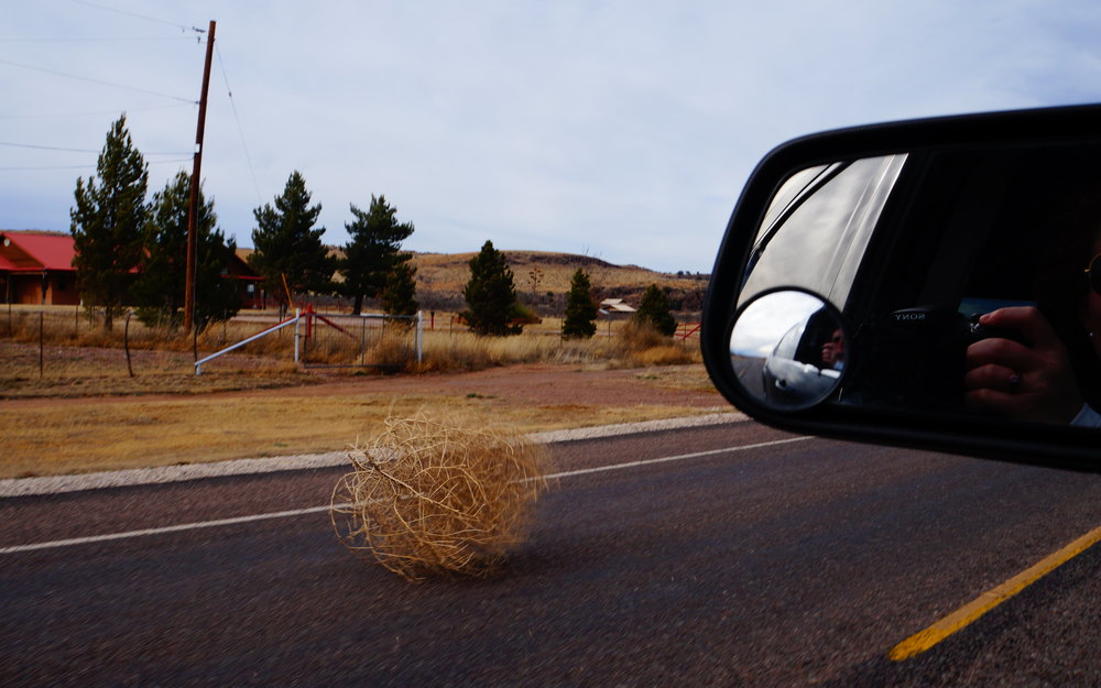 Real life tumbleweed in Fort Davis!