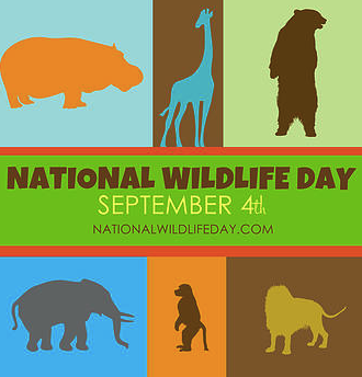 thumbnail Unique Ways to Celebrate National Wildlife Day