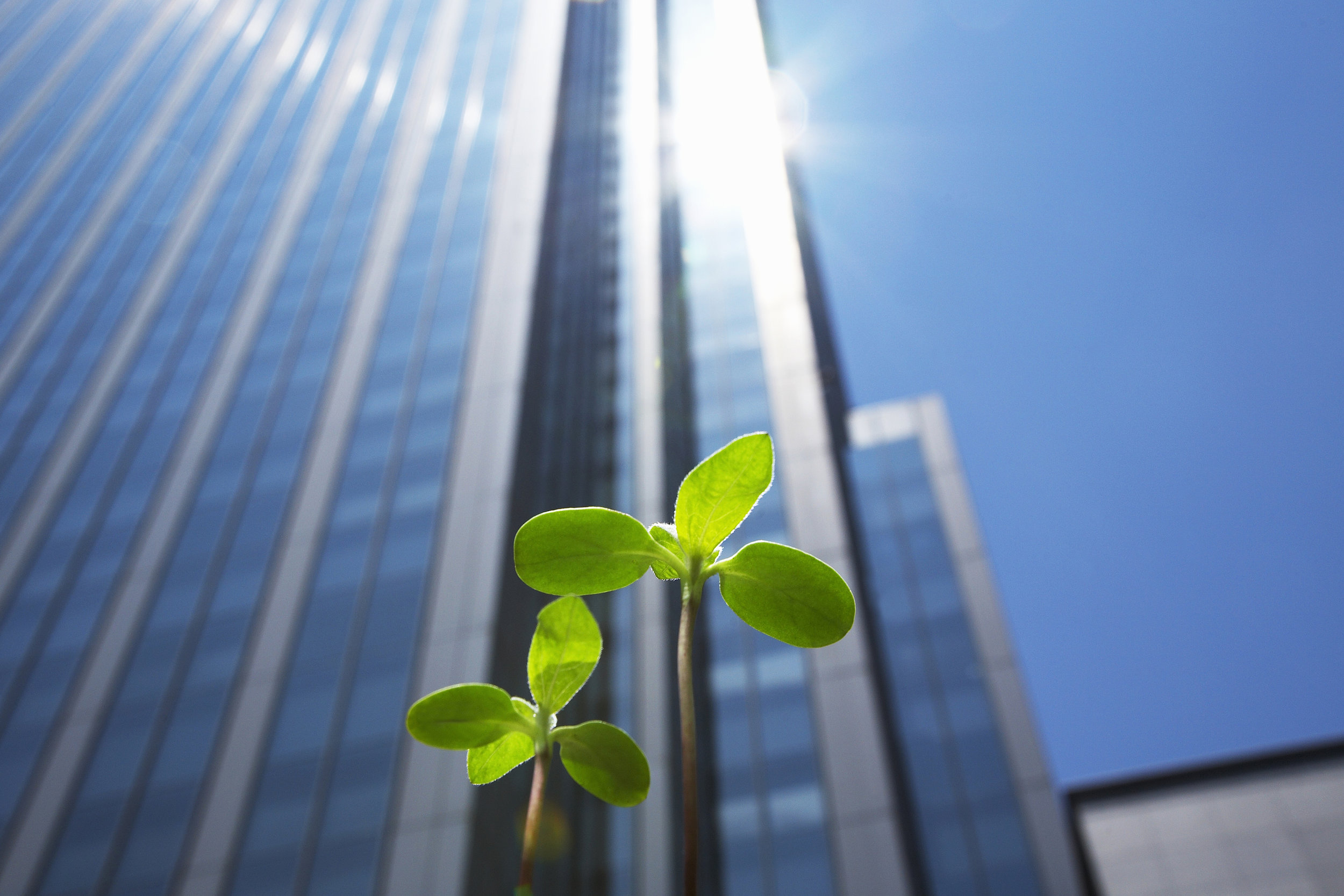 thumbnail Study Links Green Buildings to Higher Cognitive Function
