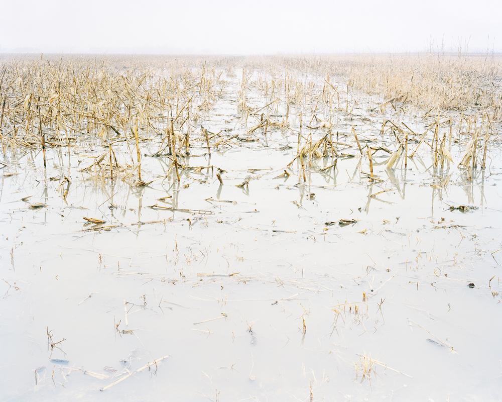 Frozen Crop, near MacDowell, KS