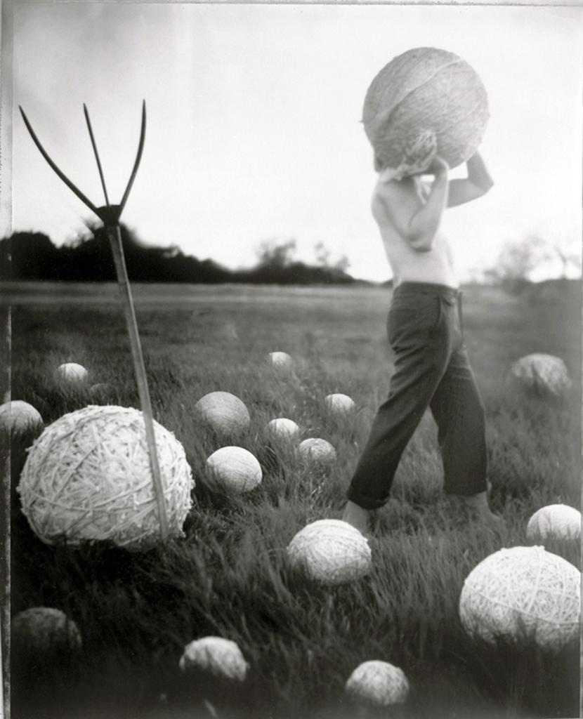 Witman's Harvest