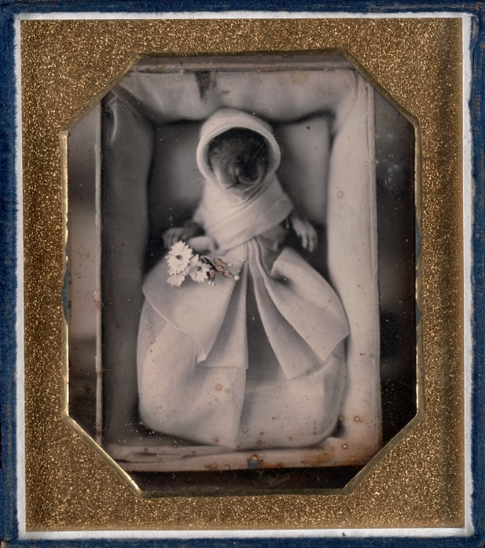 Unknown maker, American.  Genushe (animal post-mortem) , ca. 1845–46. Daguerreotype, sixth plate, image size: 3 ¼ x 2 ¾ inches. Gift of the Hall Family Foundation, 2010.35.21. © Nelson Gallery Foundation.