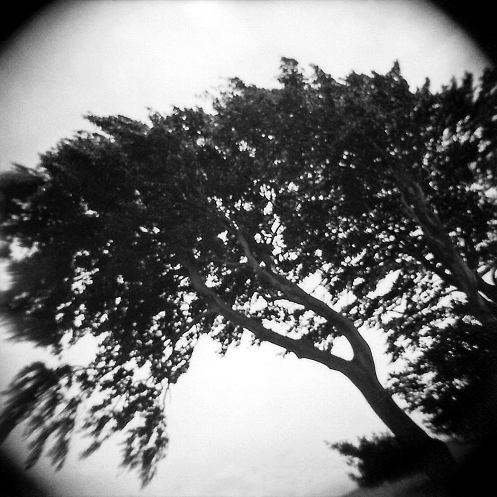 Raven Tree