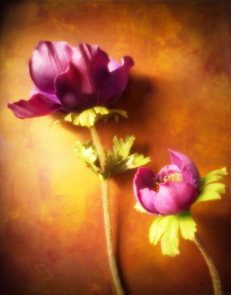 Poppy , Valarie Burke